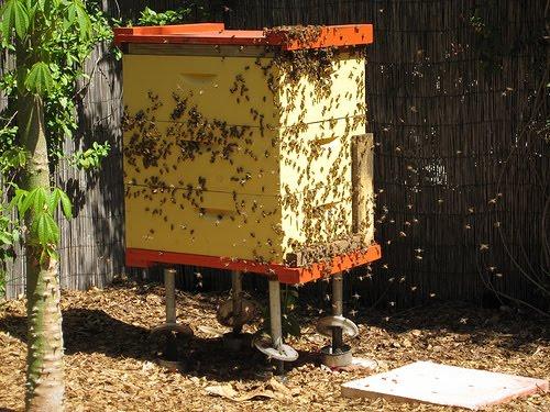 Καταστολή λεηλασίας με νέο τρόπο. Τεχνική μελισσοκόμου που δε γνωρίζαμε!