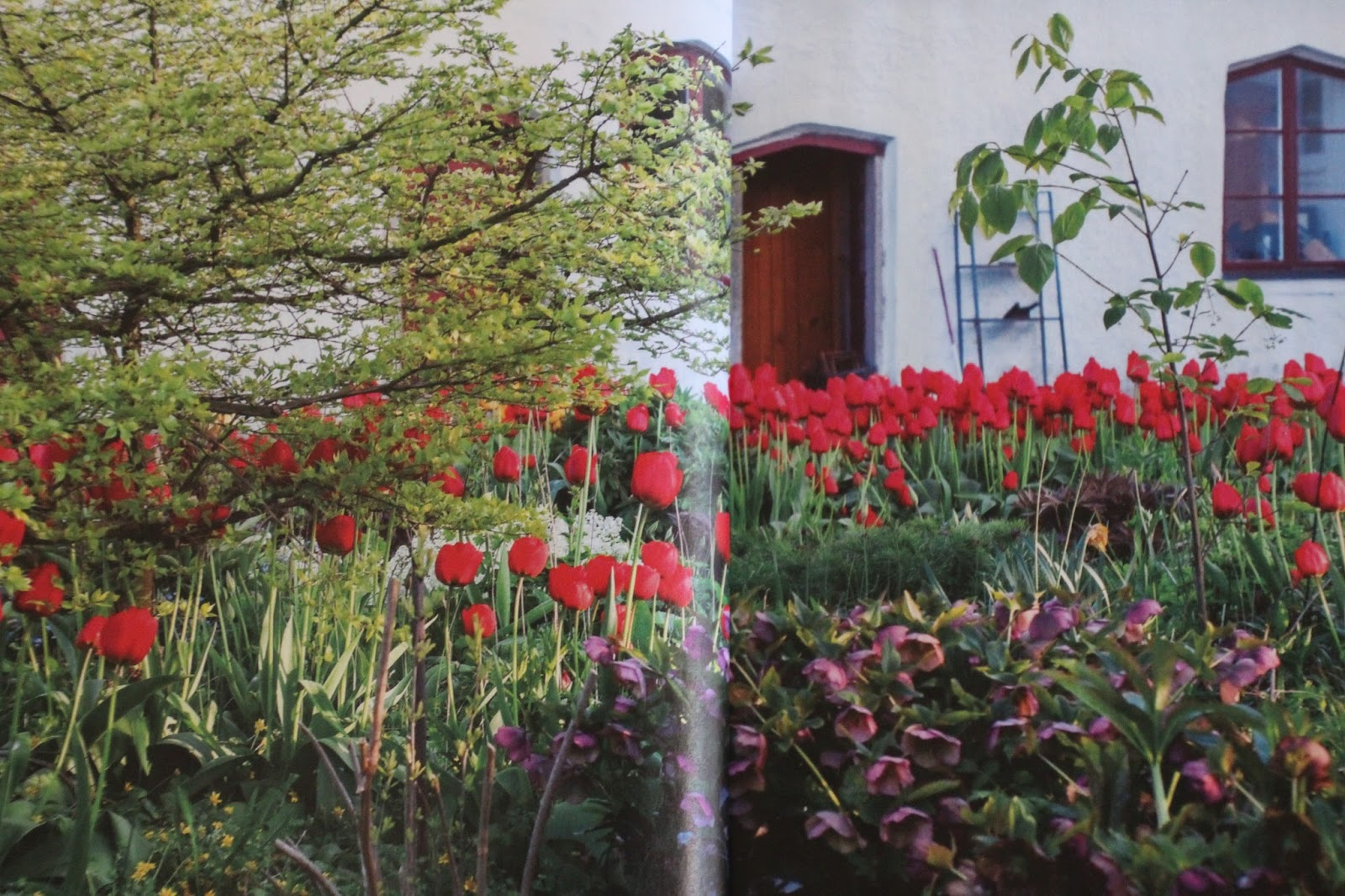 reportage Allt om Trädgård