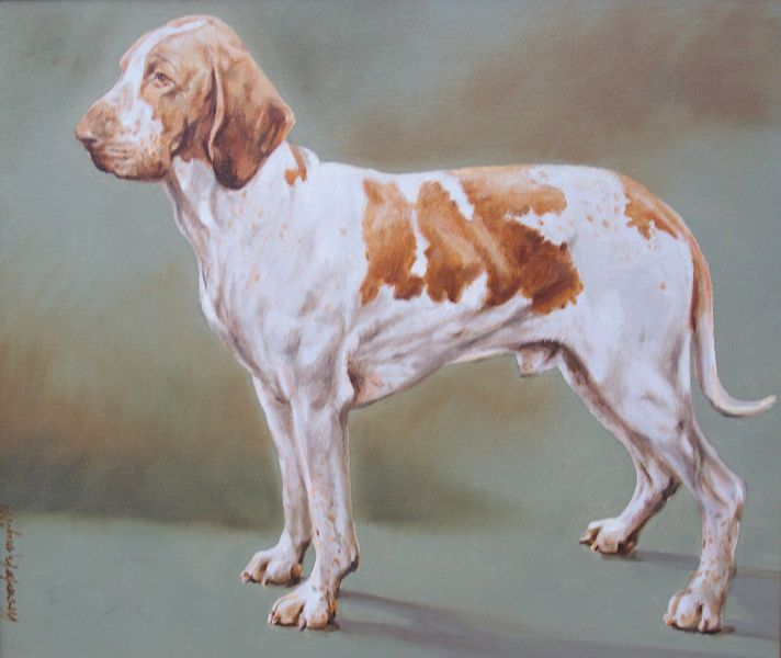 five bracco italiano dogs - photo #39