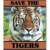 WWF Save The Tigers Campaign