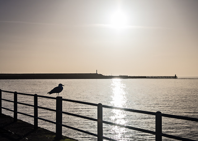 Photo of a lone seagull on Maryport promenade