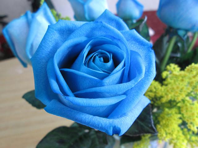 hoa hồng xanh đẹp nhất 2017 2