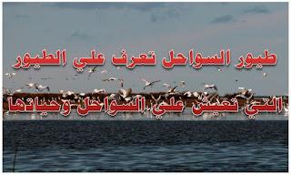 طيور السواحل تعرف علي الطيور التي تعيش علي السواحل وحياتها