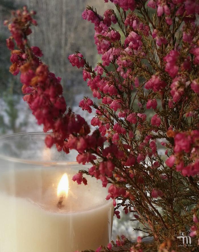 kynttilänliekki kanervikossa #sytytänkynttilän