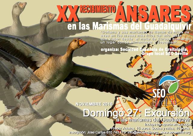 XX Recibimiento a los Ánsares, Edición 2016. Grupo local SEO-Sevilla