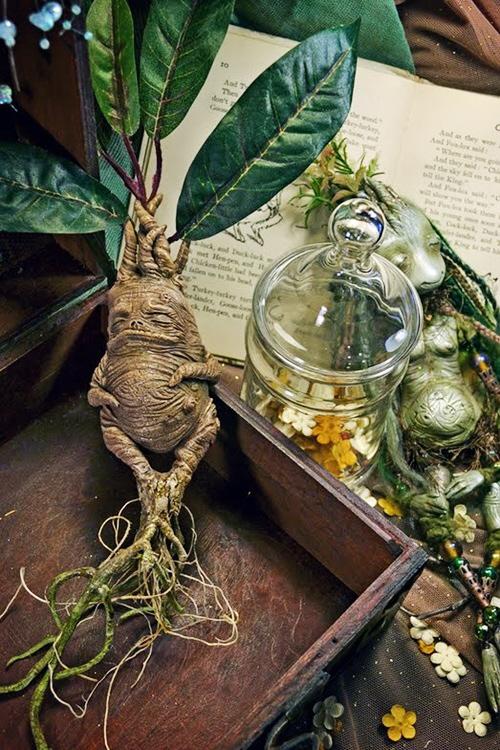 Mandrake By Sandra Arteaga