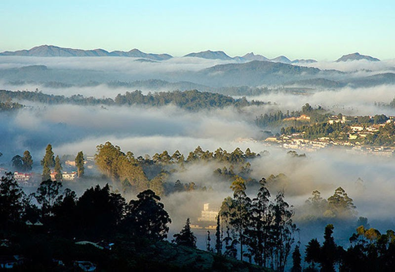 Misty Morning, Ooty