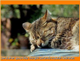 kucing British Shorthair asyik tidur mungkin ada masalah jiwa atau sedang sakit