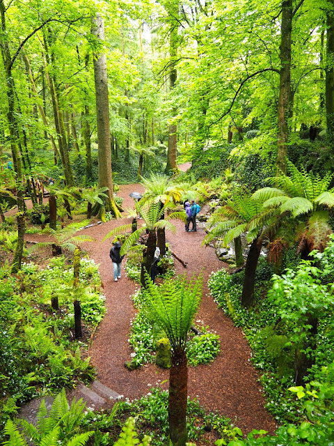 Fern Garden, Blarney Castle, County Cork, Ireland