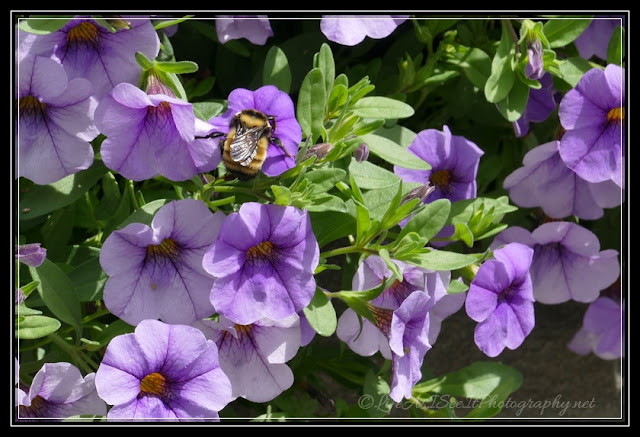LifeAsISeeItPhotography.net