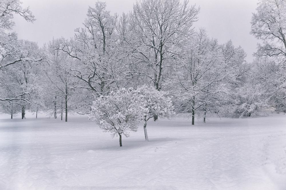 talvi, luonto, winter, winterwonderlans, lumi, snow, scandinavia, stillmoments, nature, naturephotography, luontovalokuva, Visualaddict, valokuvaaja, Frida Steiner, Auroran puisto, trees, puut, puisto, park