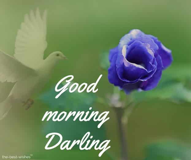 good morning darling rose