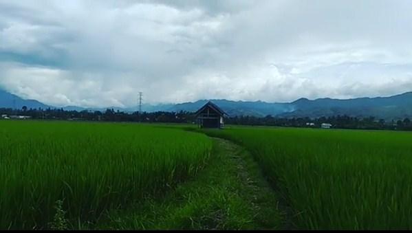 Panorama Sawah di Kabupaten Aceh Besar   Videos