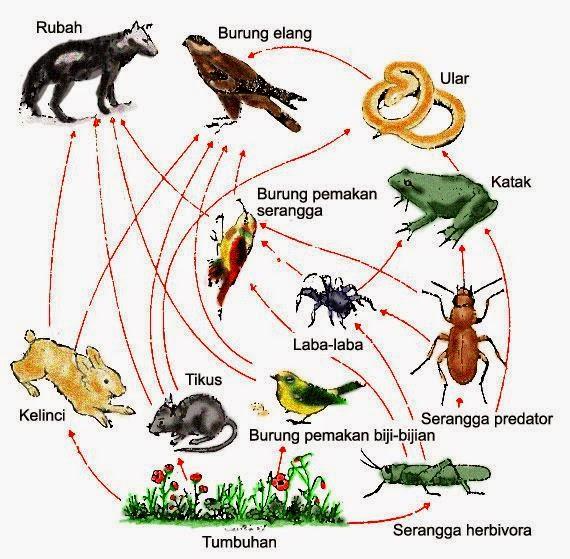 contoh diagram hutan mangrove  wahana guru interaksi makhluk hidup dengan lingkungan