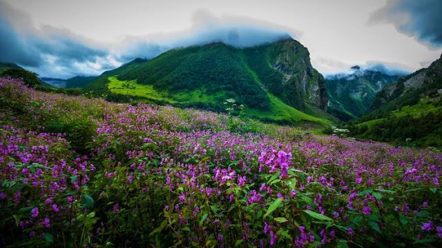 Lembah Bunga, Uttarakhand, India