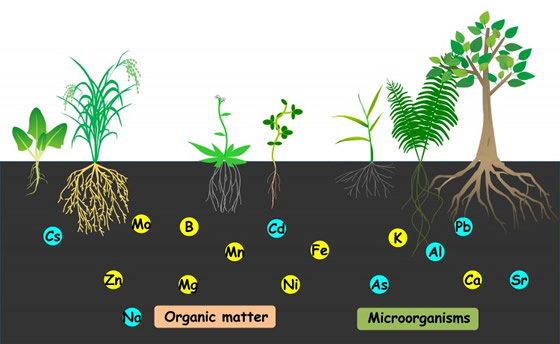 Soil and Plant Nutrients