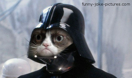 Funny Grumpy Cat Darth Vader Photo