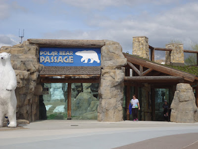 Kansas City Zoo Polar Bear