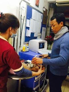 Bác sĩ Võ Văn Hải đang siêu âm cho chú chó