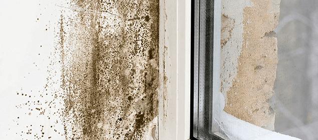 C mo eliminar la humedad y el moho de la pared r pidamente - Como eliminar el moho ...