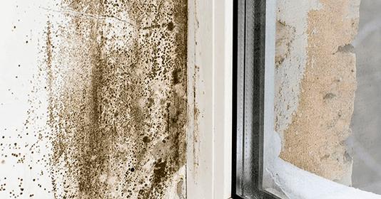 C mo eliminar la humedad y el moho de la pared r pidamente - Como eliminar la humedad de la pared ...