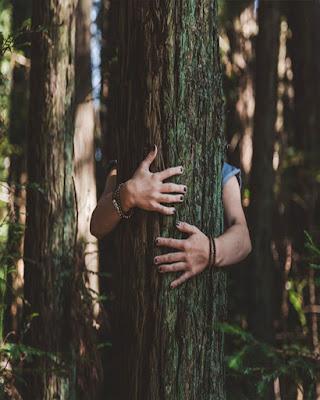 foto abrazando árbol tumblr