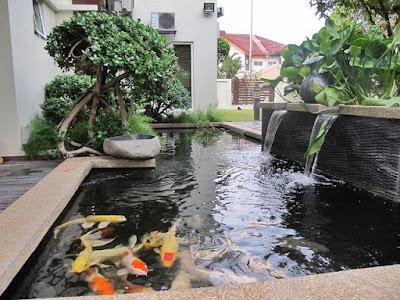 Batu Andesit Untuk Kolam Ikan Hias Minimalis