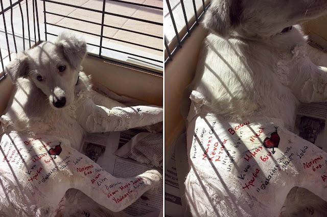 30-11-2018 η δίκη του άνδρα που πέταξε τον σκύλο του απ'το μπαλκόνι στο Άργος το 2015