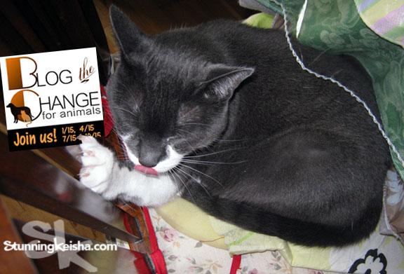 Confessions of a Vet Tech—I Help Declaw Cats #BtC4A
