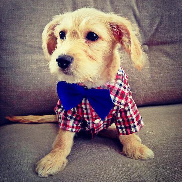"""20 em chó có phong cách thời trang """"chất chơi người dơi"""" hơn cả bạn"""
