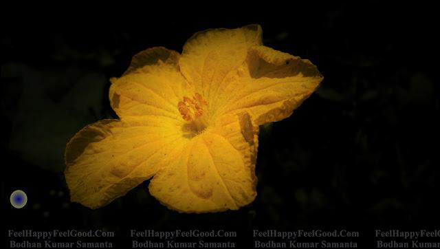 FeelHappyFeelGood Photography~Flower Photography ~ To Help ~