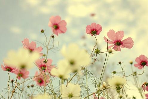 Gambar Bunga Indah dan Cantik Kumpulan Gambar