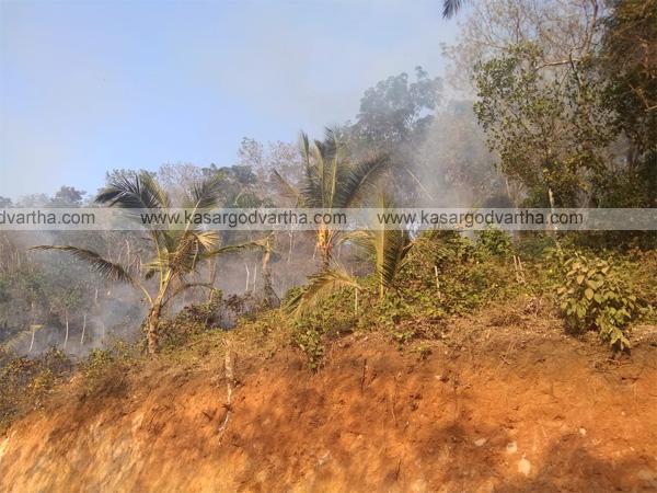 Fire in Pariyaramthattu, Rajapuram, Kasaragod, News, Kerala, fire, Burnt, fire force, Farming, Agriculture