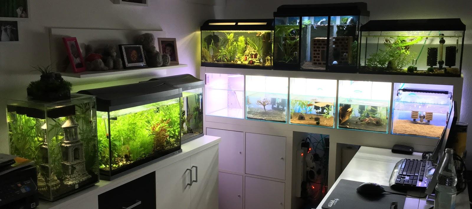 Knuts Garnelenblog: Aufbau der Aquarienanlage