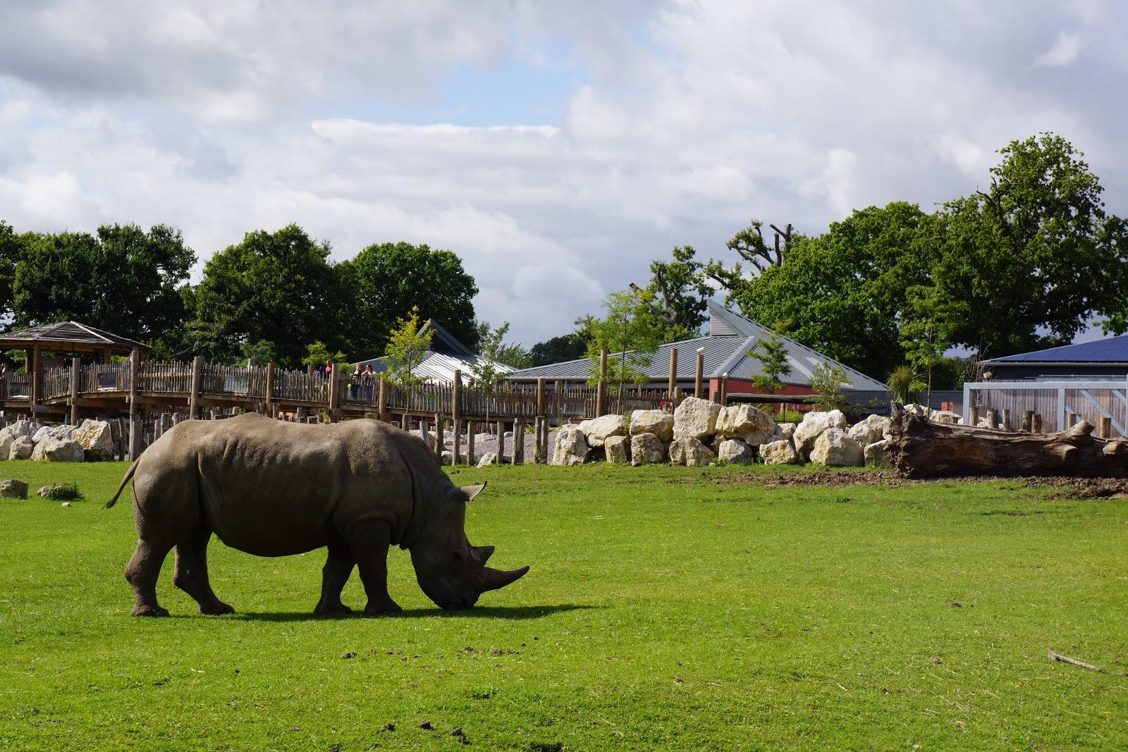 rhino in marwell zoo