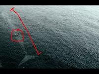 Benarkah Ikan Raksasa Yang Pernah Menelan Nabi Yunus Masih Hidup Hingga Saat Ini?