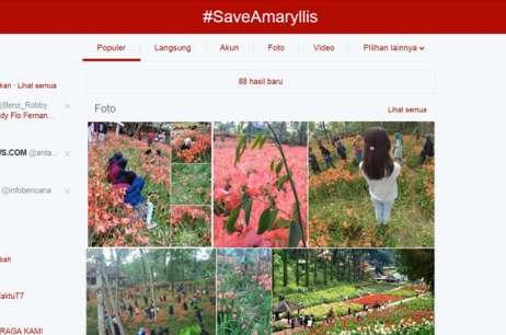 Bunga Amarilis Yogyakarta Dirusak Remaja Alay