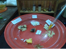 Laporan Praktikum Uji Makanan Protein (Praktikum IPA di SD)