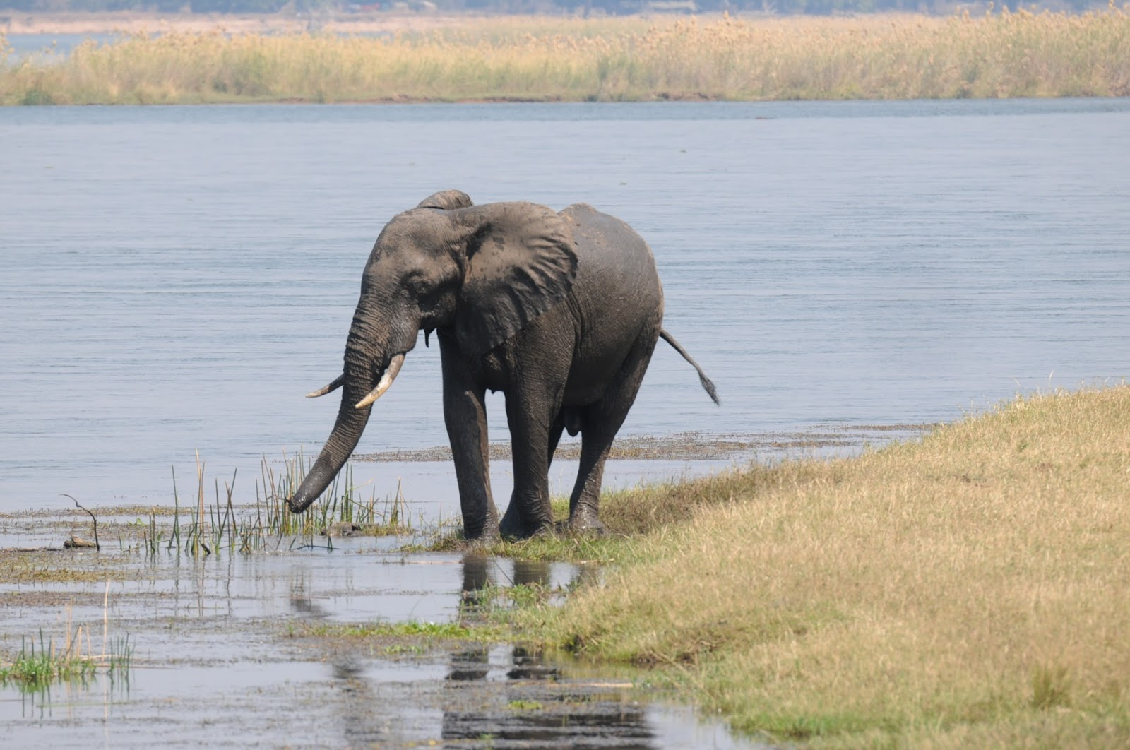 SEX ESCORT in Zambezi