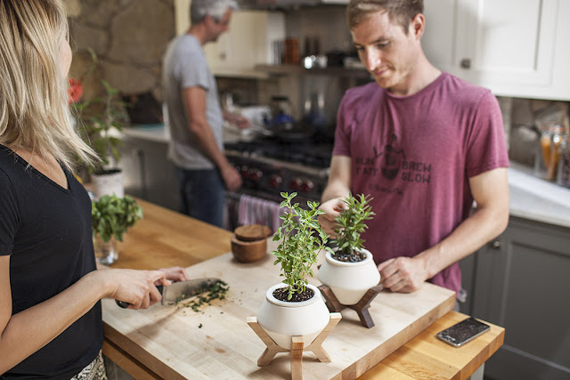 Lander Planter, Pot Untuk Tanaman Bertanah Basah
