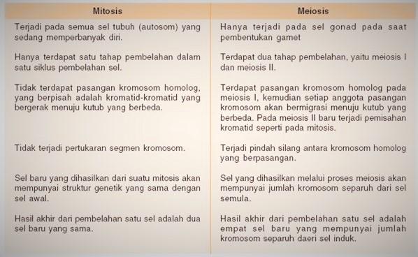 Tabel Perbedaan Mitosis dan Meiosis