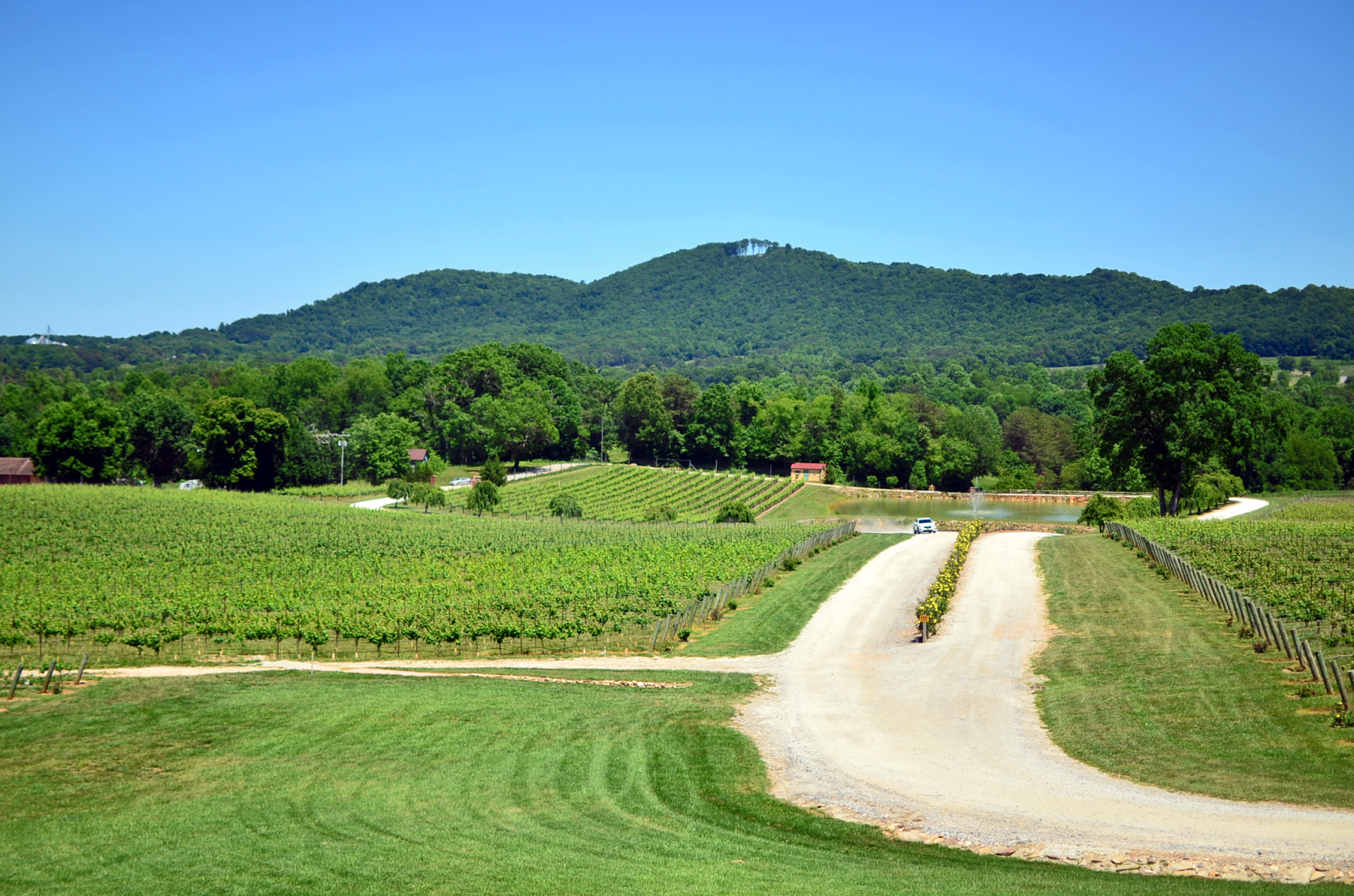 Raffaldini vineyards in North Carolina