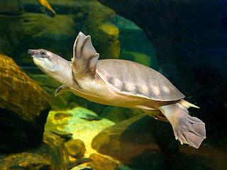 memelihara-kura-kura-di-akuarium.jpg
