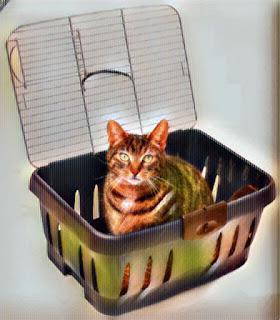 Gato dentro de transportadora de plástico