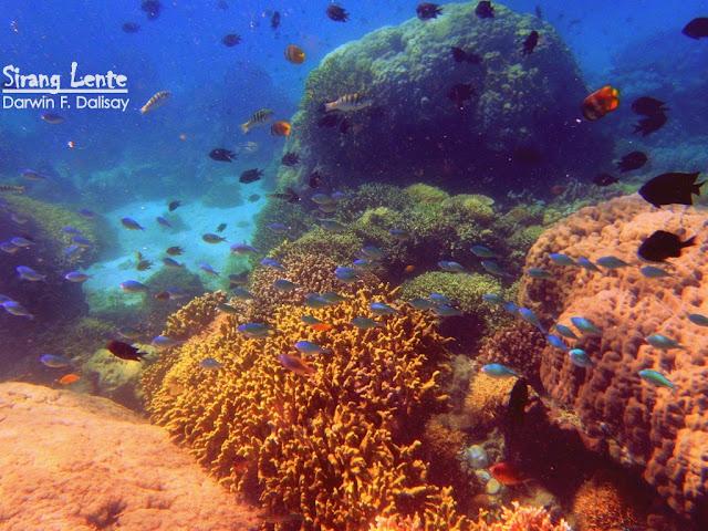 Scuba diving in Puerto Galera