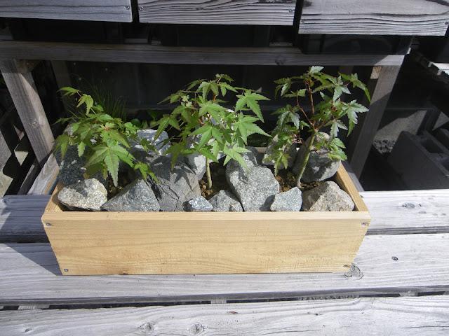 木製 鉢カバー