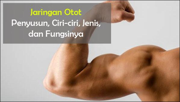 Jaringan Otot : Fungsi, Ciri, Klasifikasi, Gambar, dan Letaknya