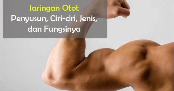 Jaringan Otot Fungsi Ciri Klasifikasi Gambar Dan Letaknya