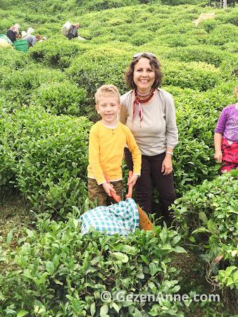 oğlumla çay hasadı, Rize