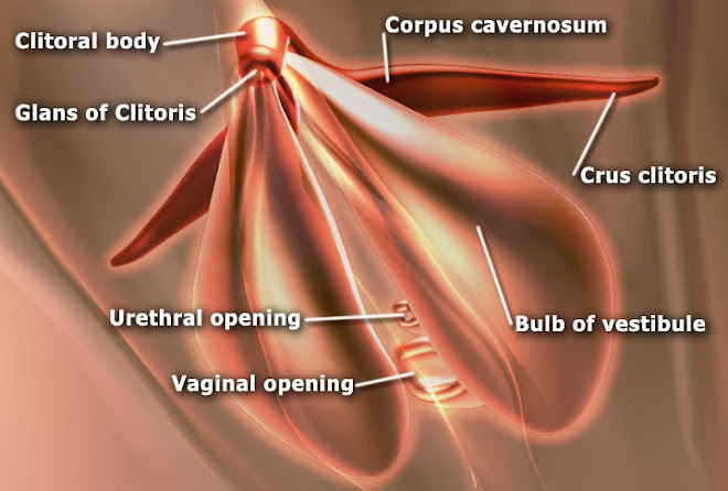 What is the function of the female clitoris